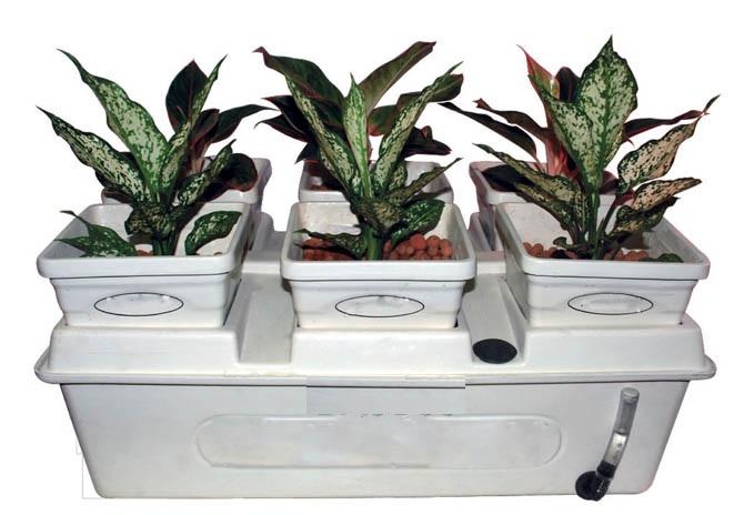 tanaman hias hidroponik