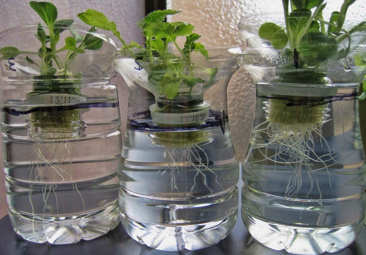 botol untuk menanam tanaman