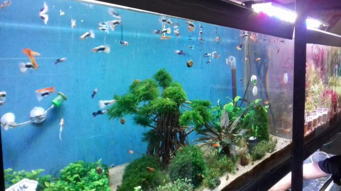 heater khusus akuarium