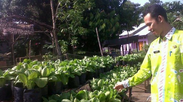 Teknik menanam sayuran di pekarangan rumah